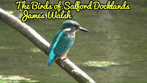 Click to view The Birds of Salford Docklands